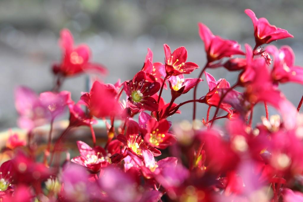 blomster have sønderjylland