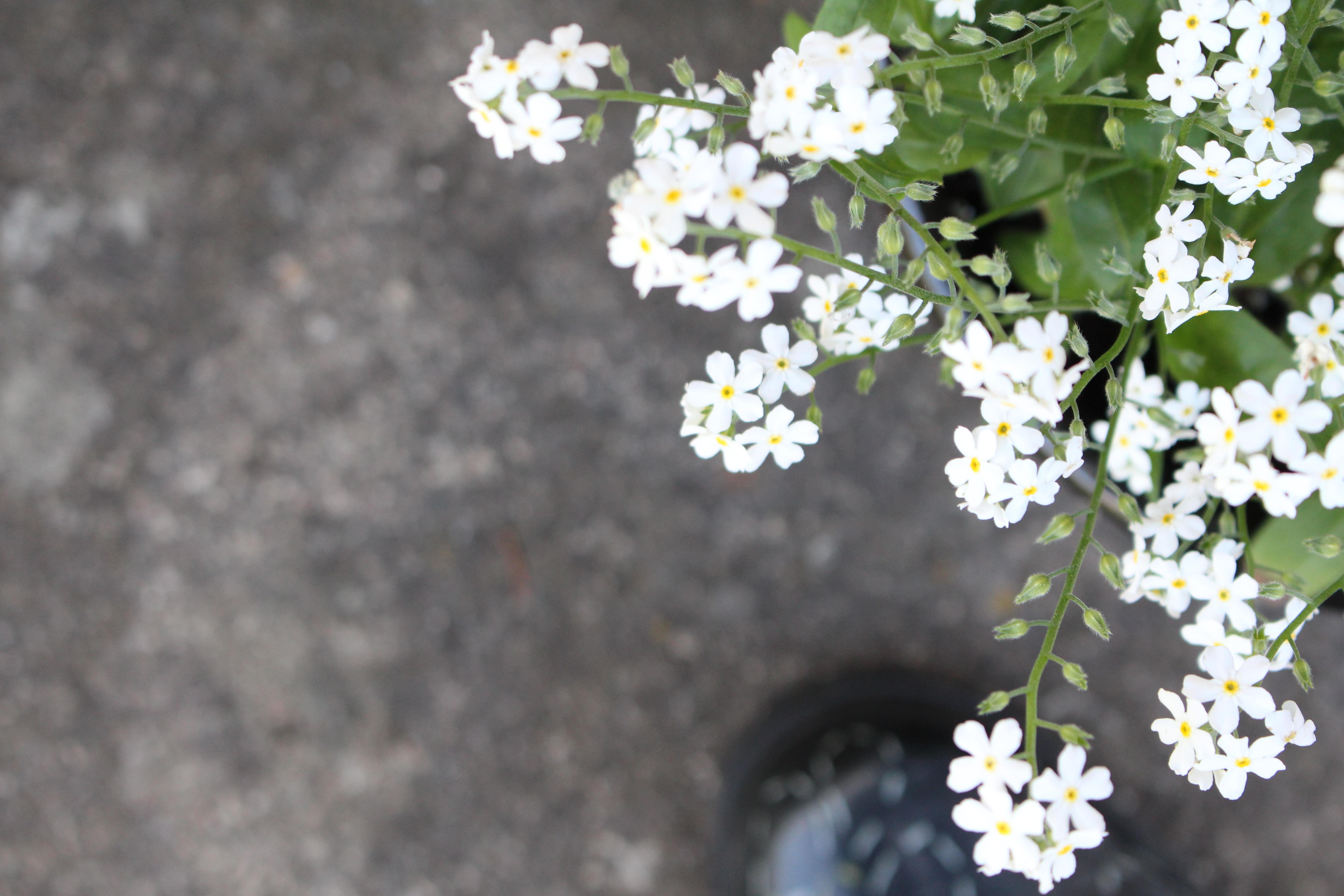 gummistøvler hvide blomster
