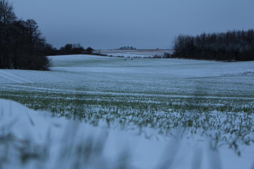 natur sne mark