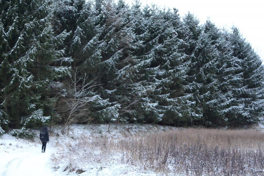 Natur skov sne
