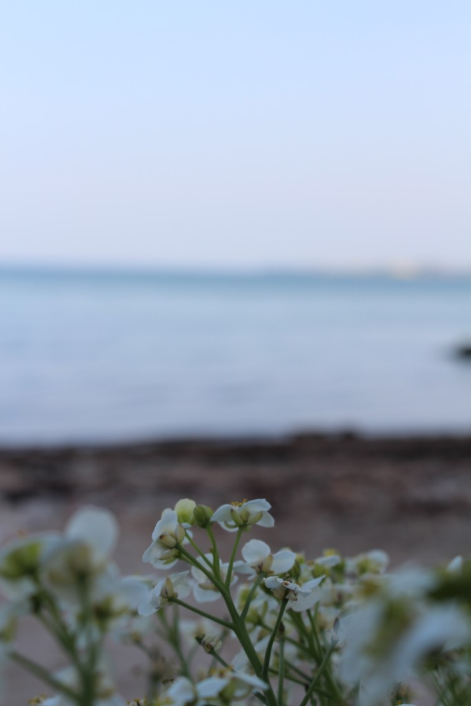 strand i aftenlys