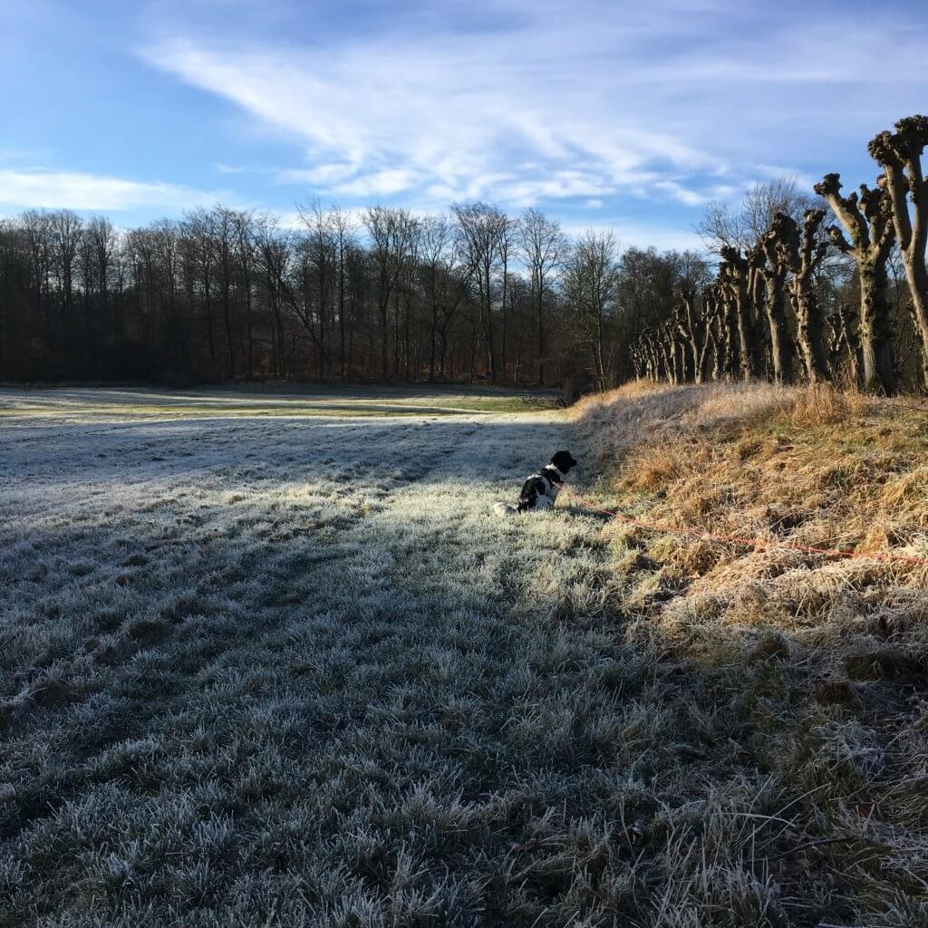 David, Karla og jeg har haft nogle fantastiske morgengåture i den fantastiske natur lige udenfor vores før. Frost, frisk luft og solen, der varmer blidt.