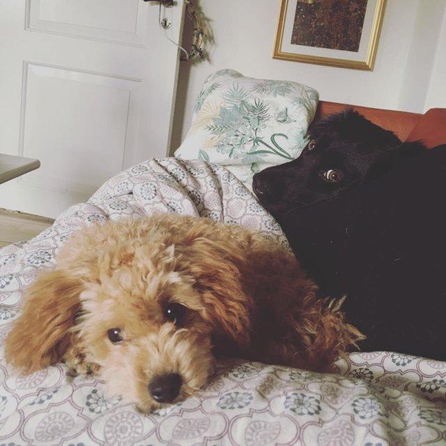 1 januar i sofaen Godt nytr  Chloehund deterikkeenbamse Karlahund