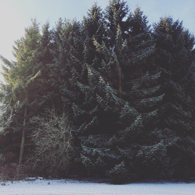 Fra min morgen naturelover skabervrk vinter sknhed naturen plandet grantrerhellip